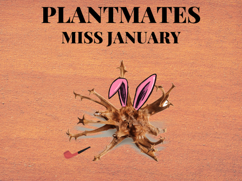 Plantmate of the Month - Miss January by Maria Silvestri