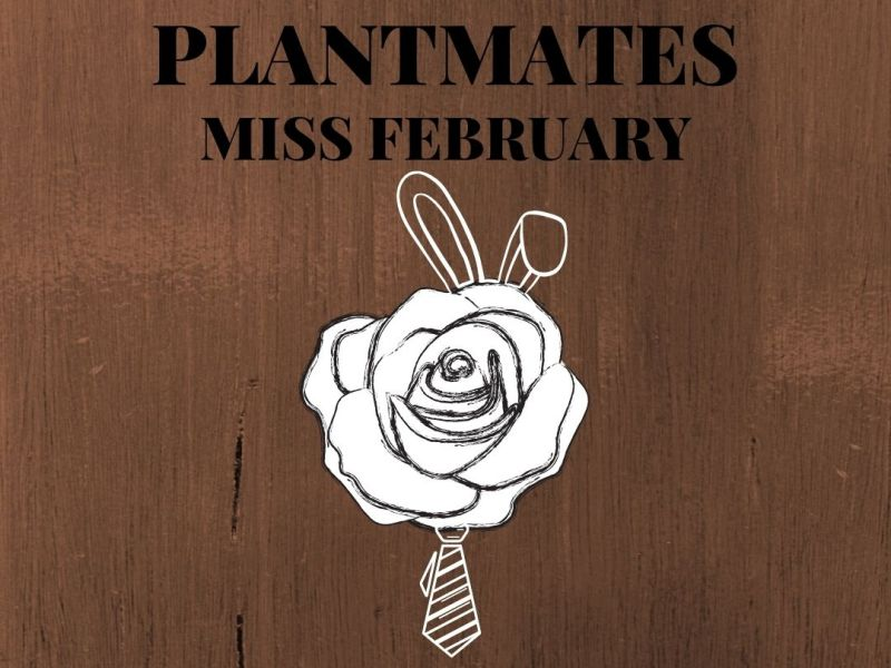 Plantmate of the month: miss february
